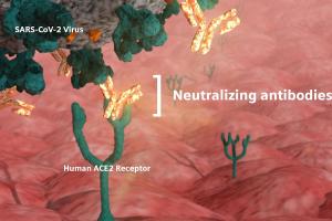 On-site measurement of antibodies against COVID-19